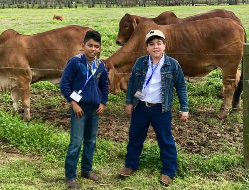 Two future Red Brahman breeders in Nicaragua visit HK Cattle!