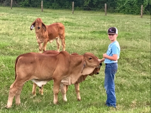 Jake-Ray-Weil-pets-some-embryo-calves-at-HK-Cattle